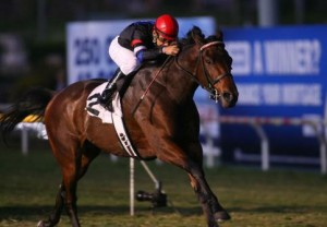 The Usual Q. T. switches surfaces in Saturday's Sunshine Millions Classic. If successful, it will mark his 7th consecutive tally. (photo by Eclipse Sportswire)